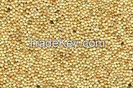 High   quality yellow broom corn millet/grain