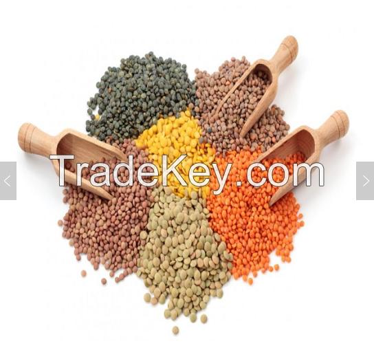 Grade A Red Split Lentils /  Red Lentils / Yellow Lentils / Green Lentils