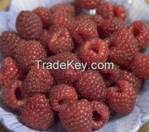 Heritage Red Raspberry