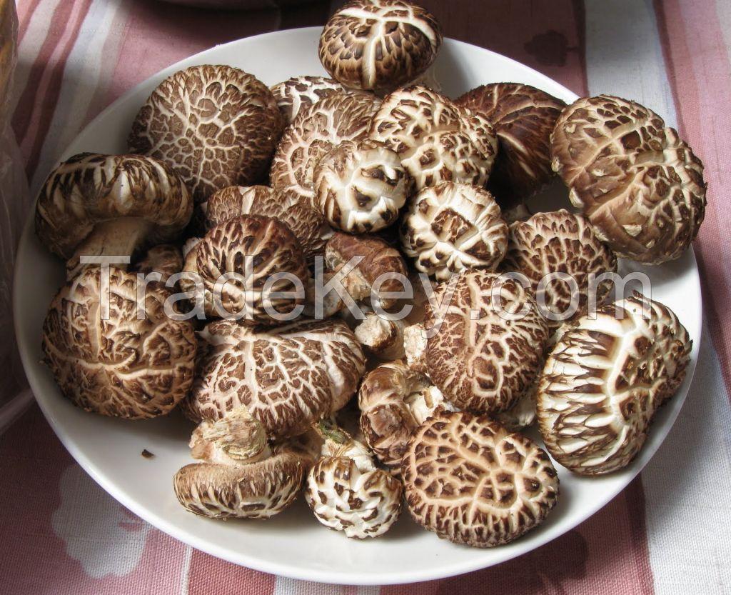 healthy organic dried shiitake mushroom