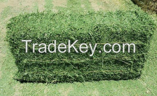 Premium Quality Alfalfa Hay