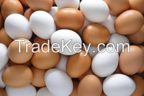 Fresh white and brown chicken eggs from Ukraine