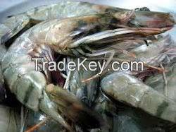 Frozen Fresh White prawns,Clean quality fresh Prawns