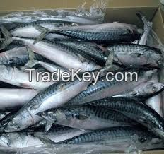 Frozen Fish,Frozen Horse Mackerel,Frozen Ribbon Fish