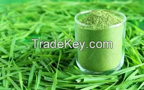 100% Organic Wheat grass powder,Wheat Grass powder