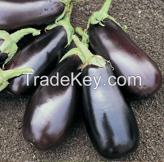 Fresh Eggplant for sale