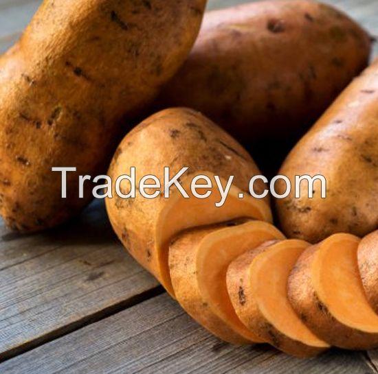 fresh Sweet Potatoes for sale