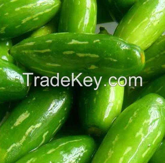 IVY Gourd for sale