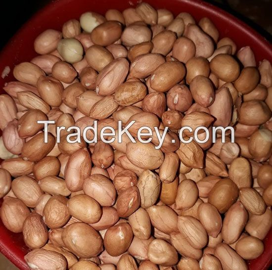 Peanut and Groundnut Without Shell for sale