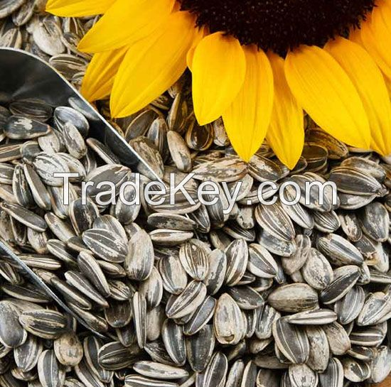 Sunflower Seeds for sale