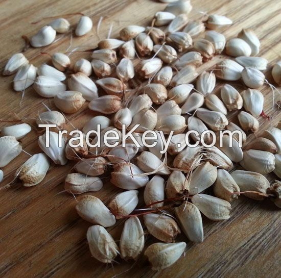 Safflower Seeds for sale