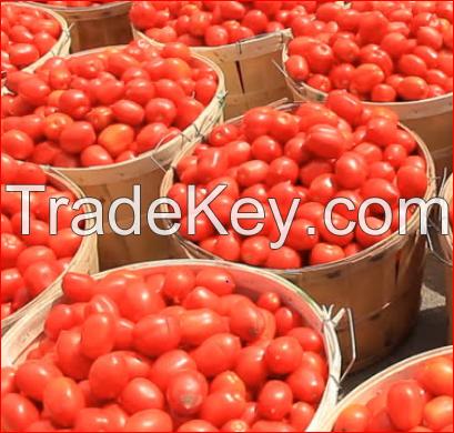 Organic Fresh Tomatoes