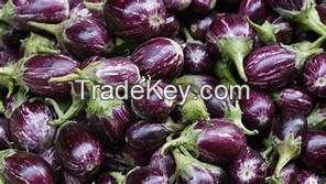 Fresh Vegetables, like potato, carrot, Moringa drumsticks, Onion etc