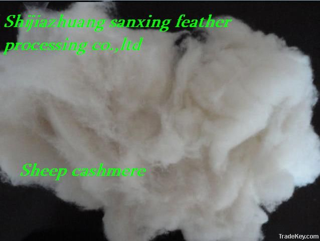 combing sheep cashmere