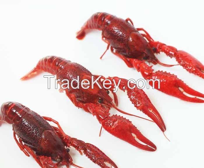 Crayfish / Crawfish