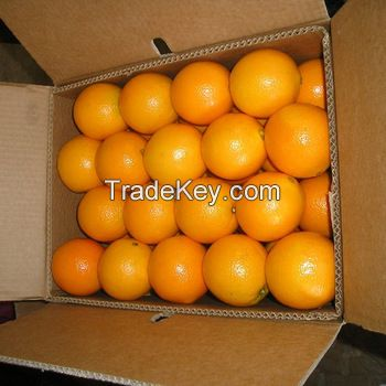 Fresh Oranges, Lemon, Lime, grapefruits, Citrus fruits