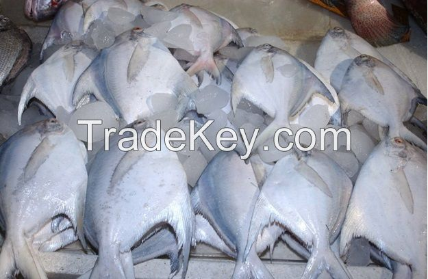 Live Chilled Frozen Fresh or Salt Water Fish and Sea Food