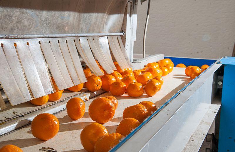 Factory Wholesale Food Grade PU Conveyor Belt