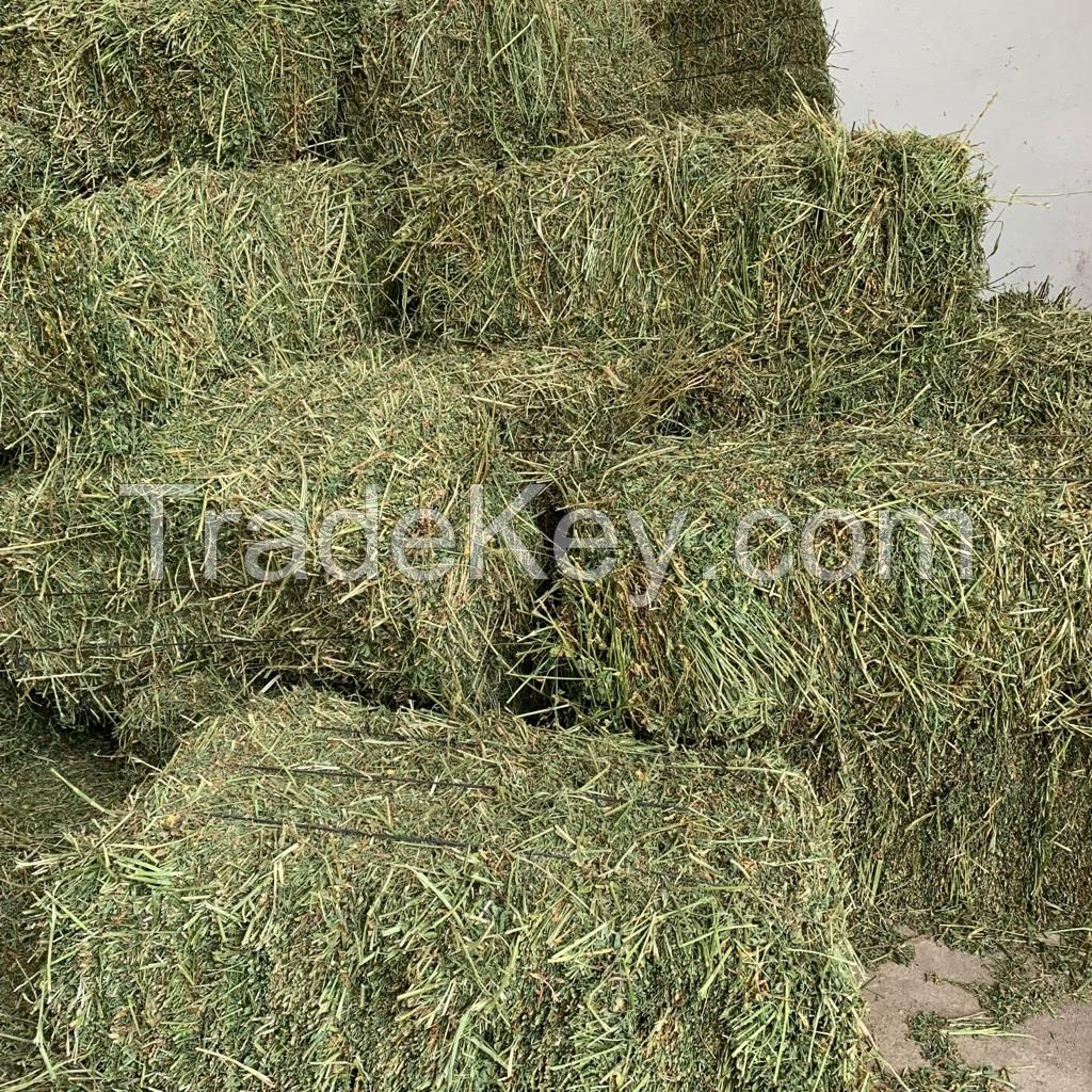 Timothy Hay For Horses