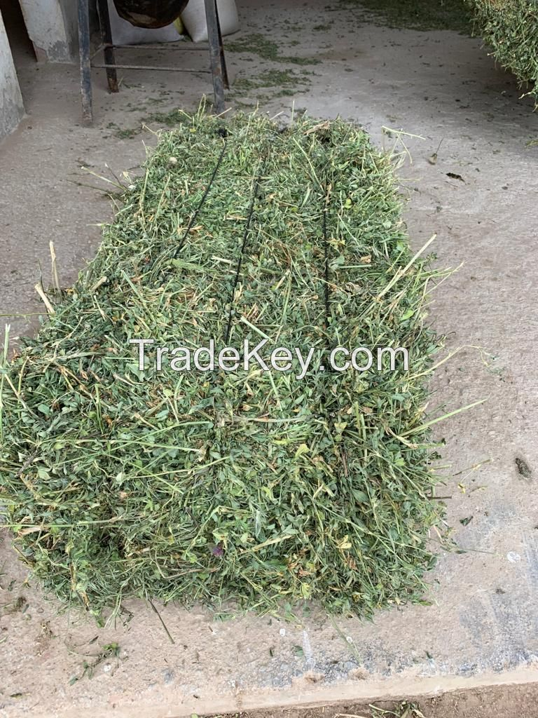 Timothy Hay For Cattle