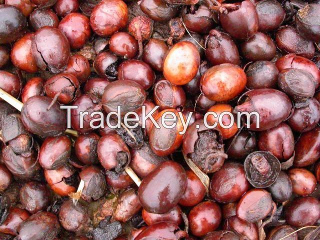 high quality Sheanut for sale