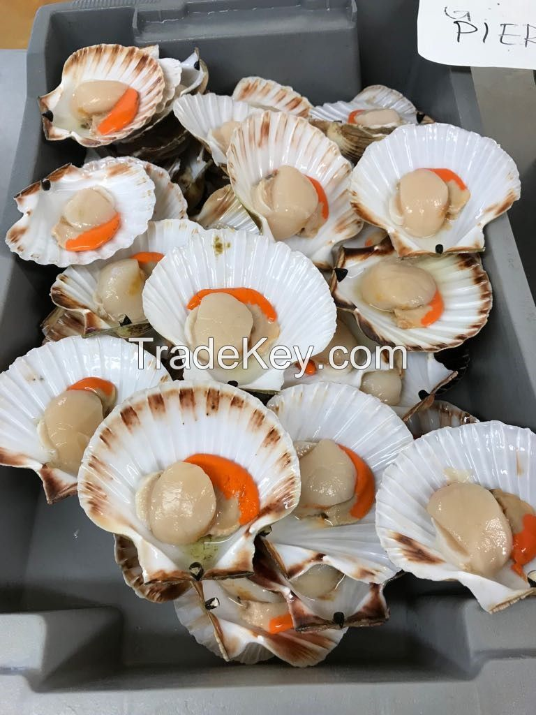Brown Crab, Blue Lobster, Langoustines, Razor Clam