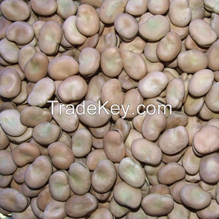 High quality dried broad beans for canned beans with different size