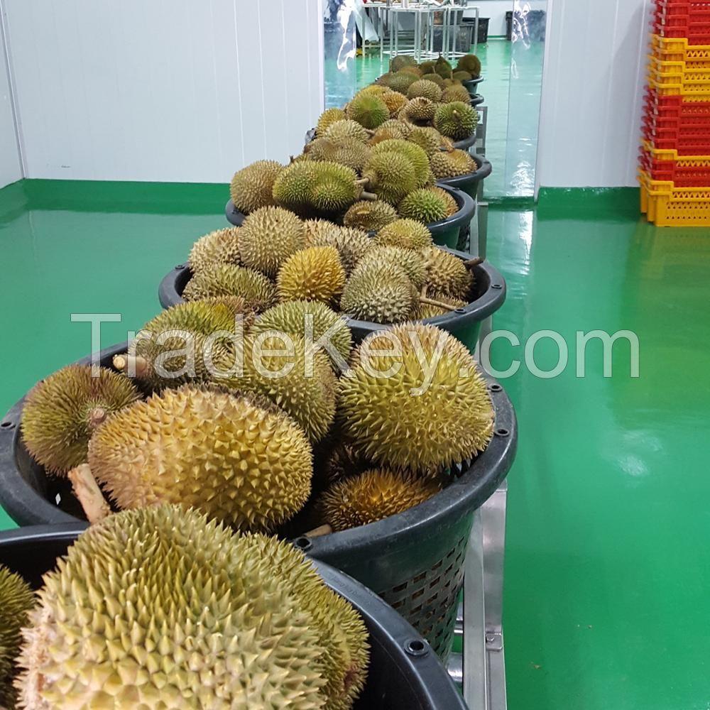 Premium Fresh Musang King Durian D197