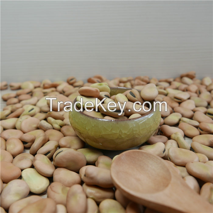 High quality High quality dried broad beans for canned beans with different size  for canned beans with different size