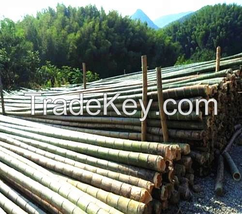 Natural Bamboo Poles, Raw pole bamboo for construction and building materials