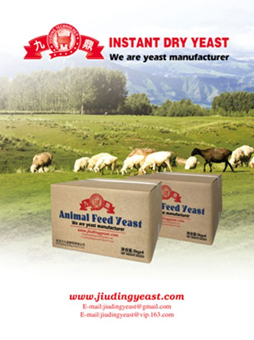 Factory provided Animal feed additives of active feed yeast