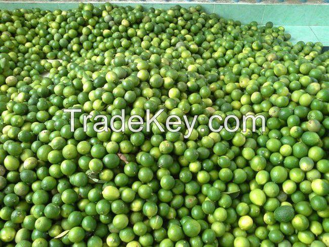 Fresh Seedless Lime (Lemon) 100% Vietnam Origin