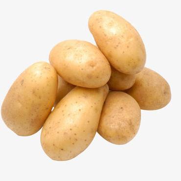 Fresh Potato | Premium Export Quality | China