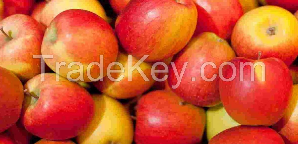Bulk Sales Fresh Apples