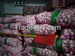 QUALITY WHITE FRESH GARLIC, WHITE GARLIC