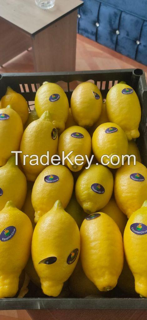 Fresh Lemon , Citrus Lemon