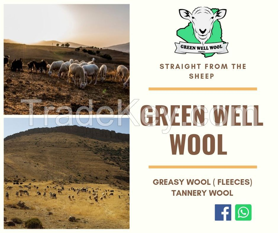 Algerian Greasy wool