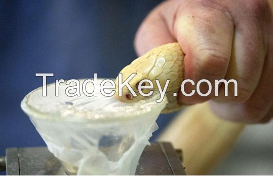 Sell Snake Venom Poison(Agkistrodon, Agkistrodon acutus, Bungarus fasciatus)