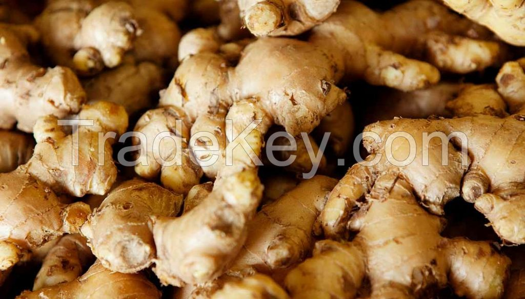 Fresh Ginger from Nigeria