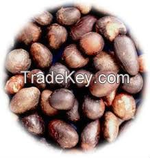 Palm Kernel Nuts
