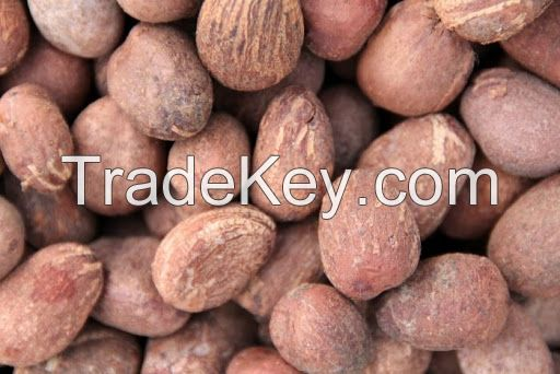 High Quality Shea Nuts
