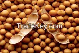 Soybeans | Non-GMO Soybeans