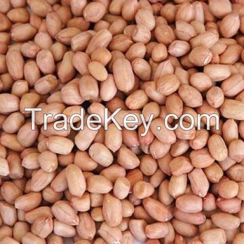 Groundnut | Peanuts