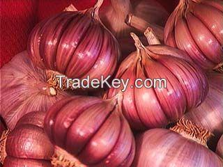 Garlic red