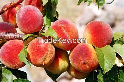 peach florida