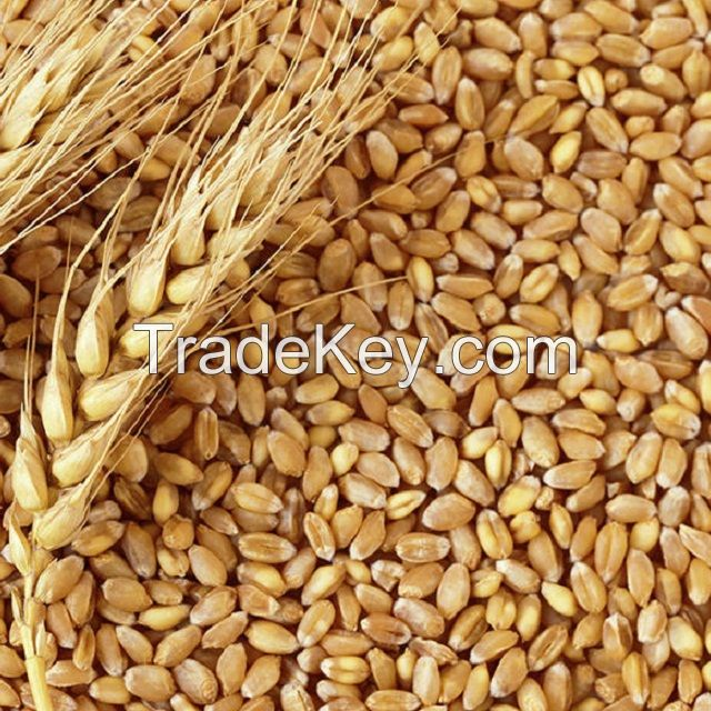 Wheat in the range of wholesale - shipping worldwide CIF/FOB