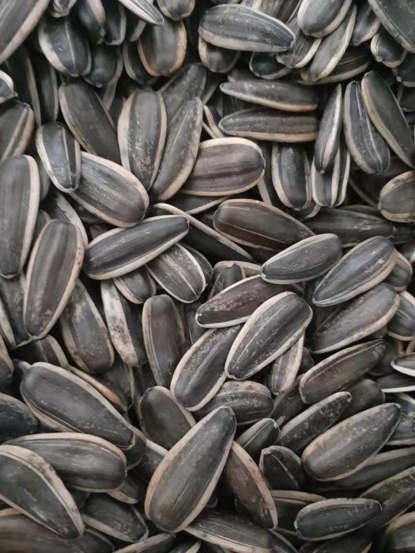 361 sunflower seeds