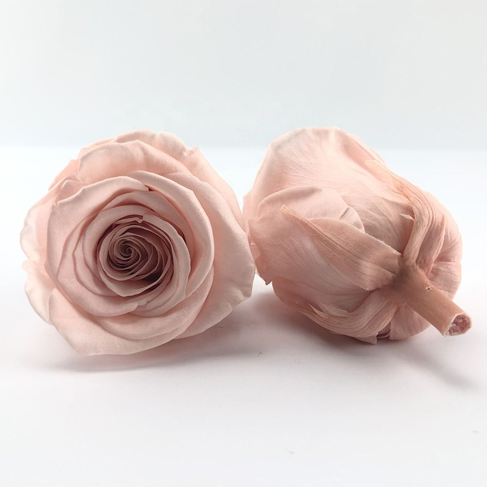 5-6cm Real Natural Eternal Forever Immortal Preserved Flower Roses