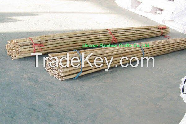Natural dry bamboo canes for farm vegetable supporting