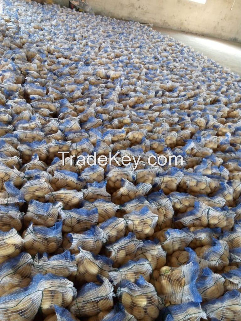 New Harvest 2020 Fresh Potato